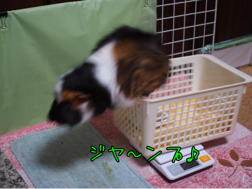 20160925weight3.png