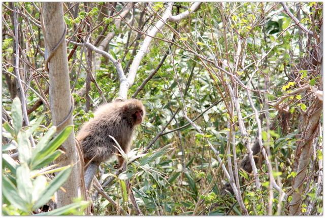 サル 猿 さる 写真