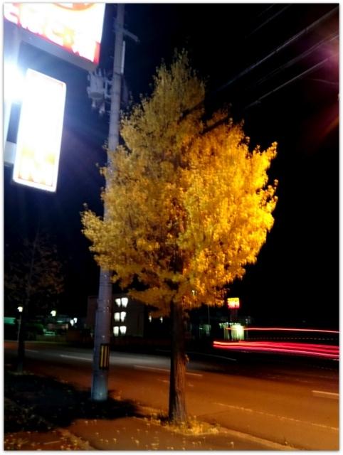 紅葉 イチョウ 銀杏 青森県 青森市