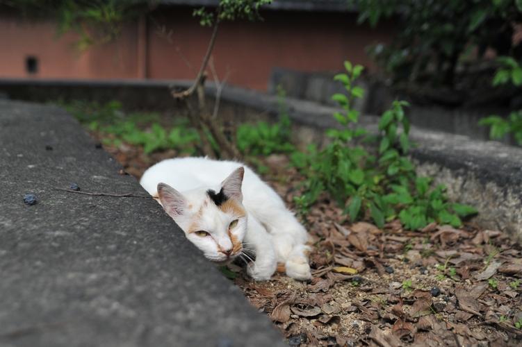 目つきの悪い三毛猫