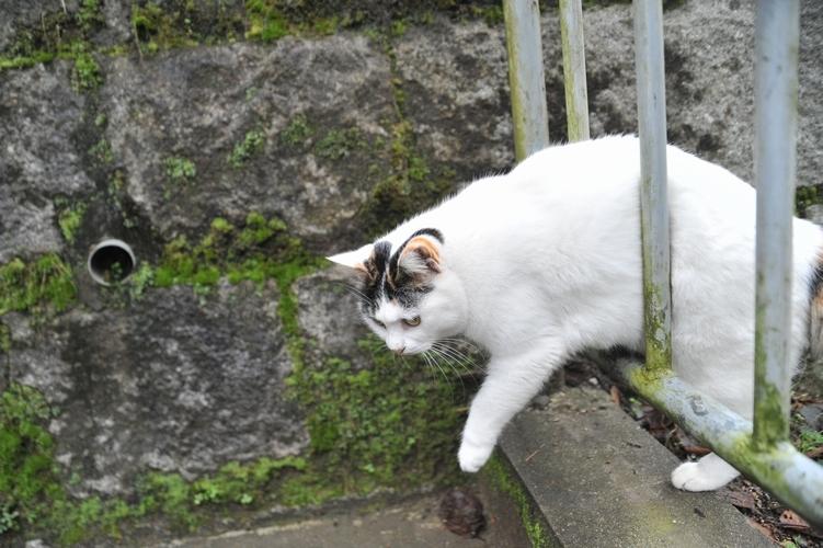三毛猫/柵越え