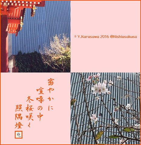 161111冬桜