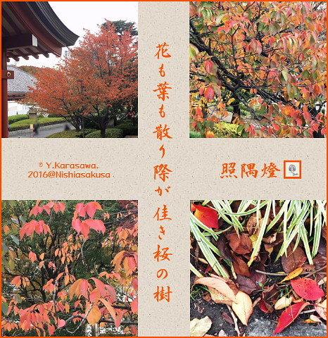 161121桜の紅葉