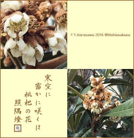 161210ビワの花