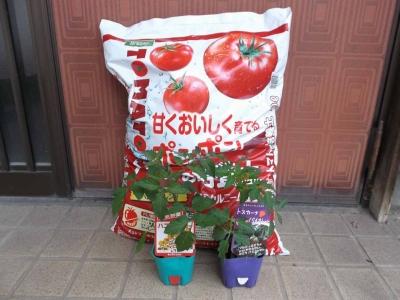 2016トマト栽培