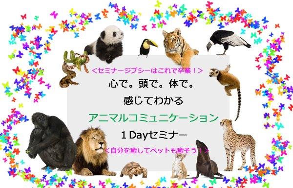 アニマルコミュニケーション1Dayセミナー
