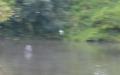 1611 江津湖野鳥 カワセミ2
