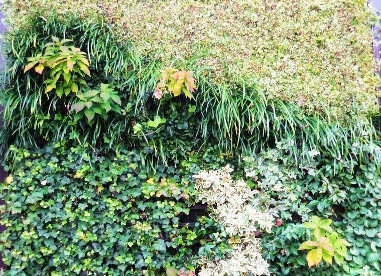 京都植物園の植物の壁