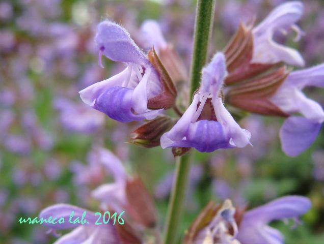 5月13日紫エイリアン