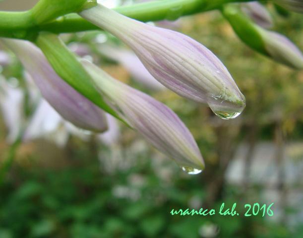 6月2日雨の日4