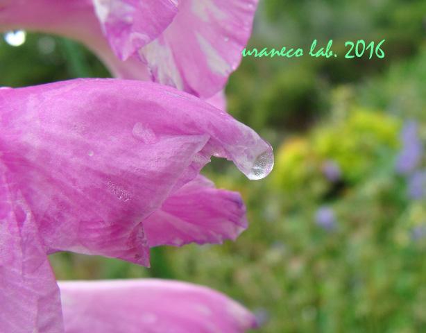 6月2日雨の日