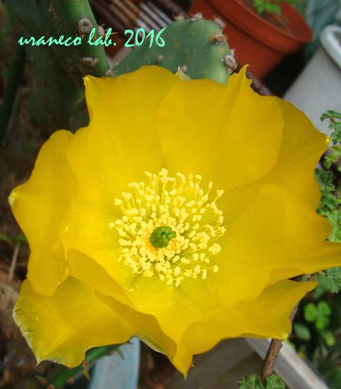 6月17日黄色2