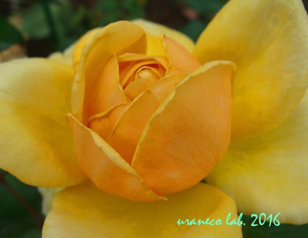 6月17日黄色3