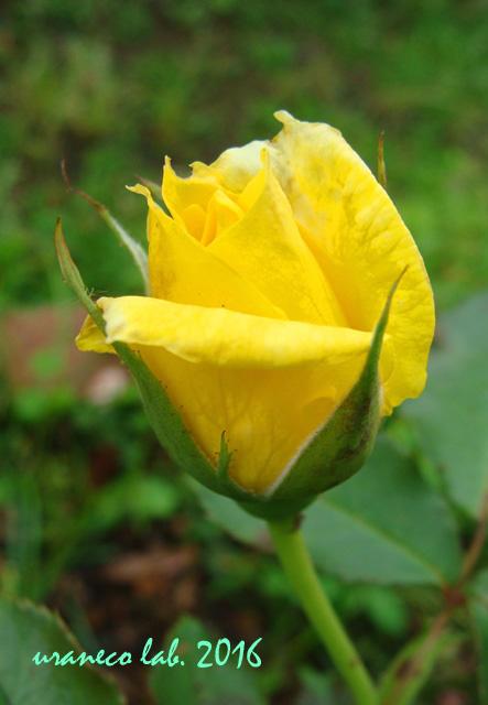 6月17日黄色4