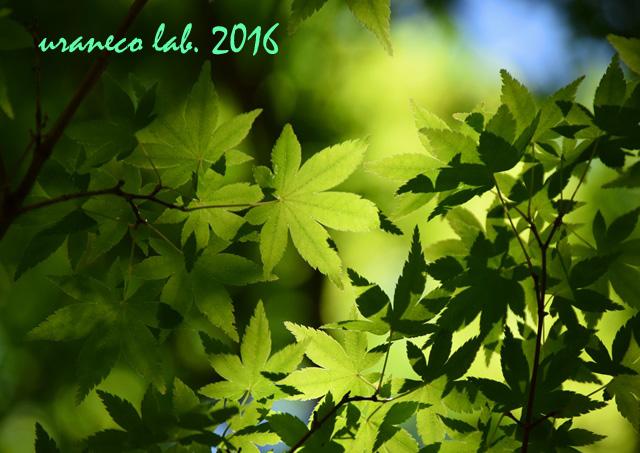 6月27日green