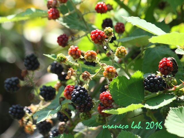6月27日berry2