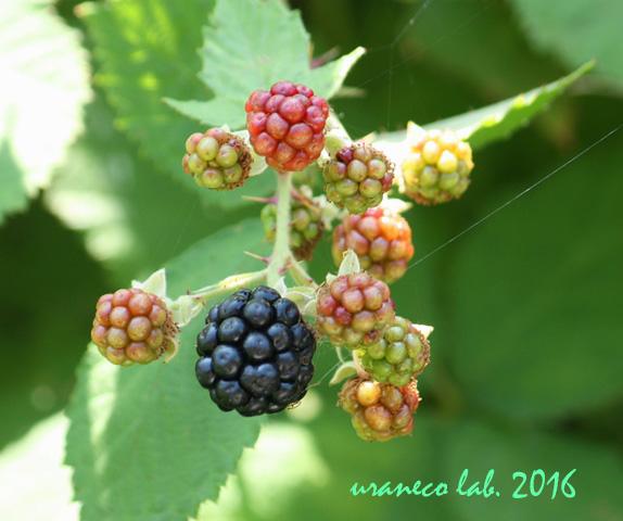 6月27日berry