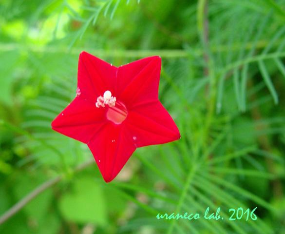 7月5日Red Star