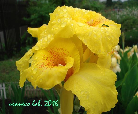 7月8日雨の日4