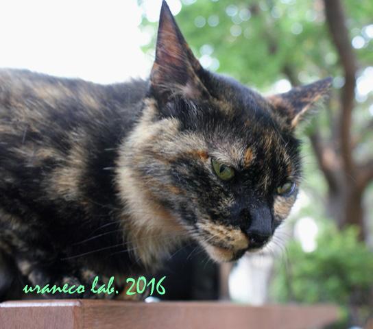 7月12日サビ猫