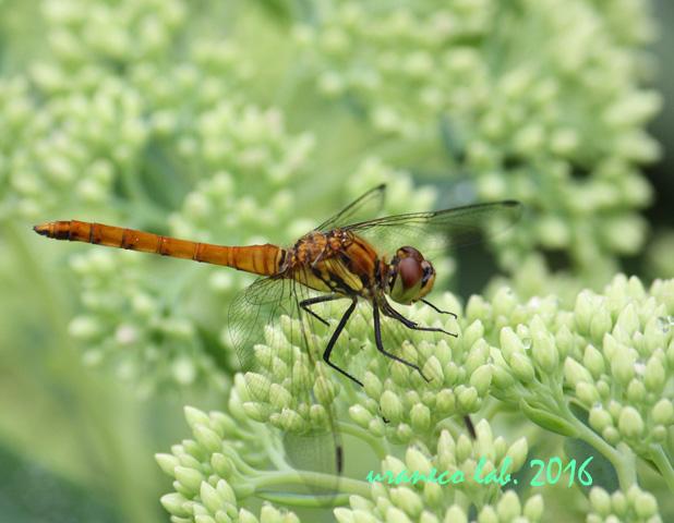 7月8日dragonfly2