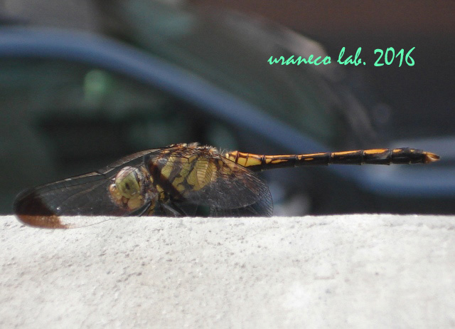 7月8日Dragonfly