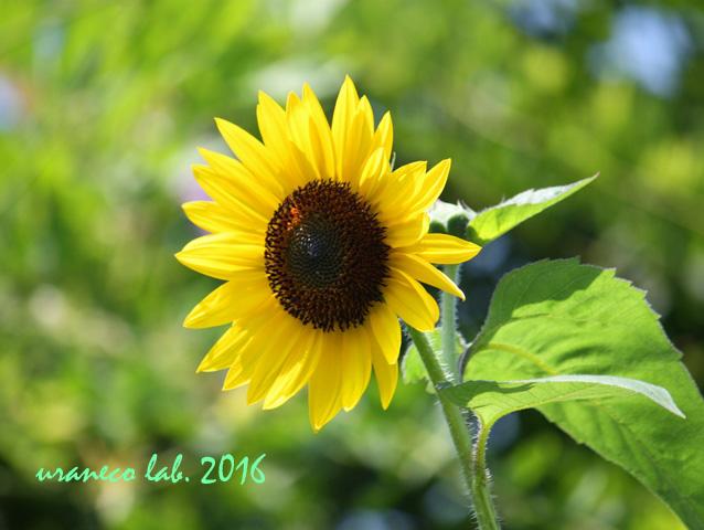 7月22日夏の色3
