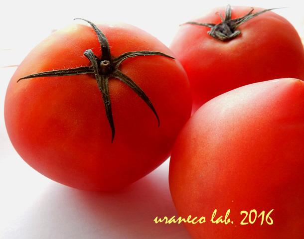 8月2日トマト