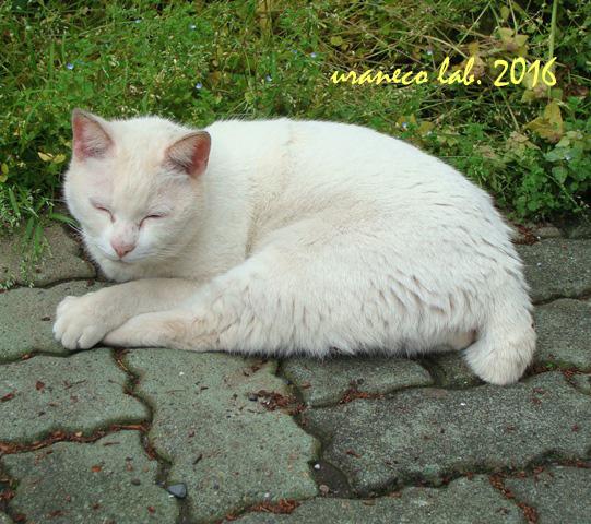 8月3日眠い猫4