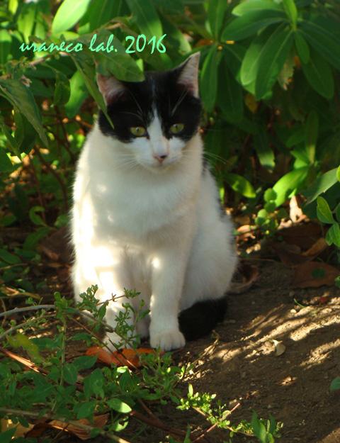 7月28日白黒猫