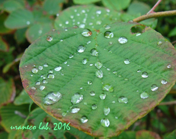 9月6日雨上がり