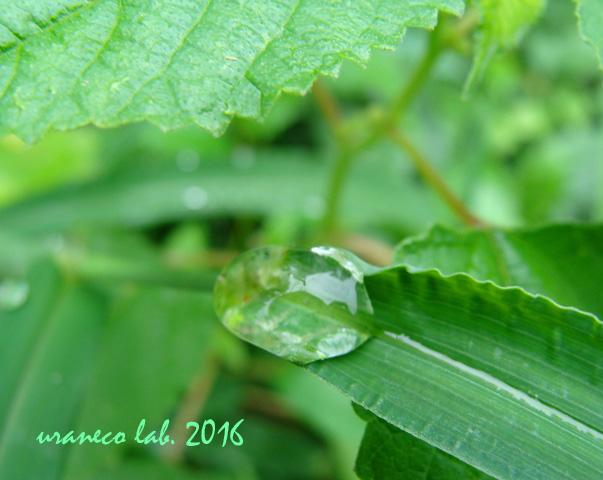 9月6日雨上がり3