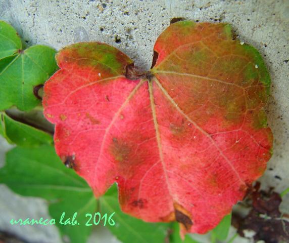 9月6日秋のはじまり5