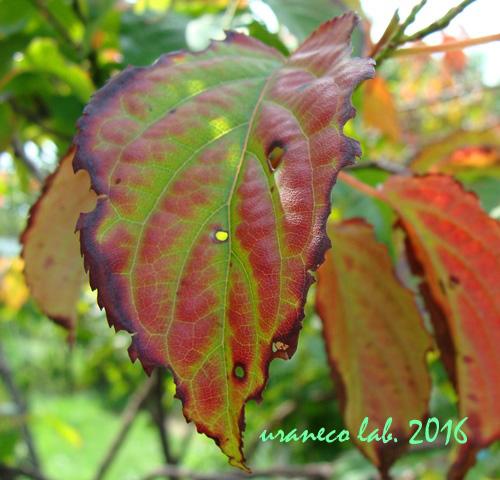 9月6日秋のはじまり4