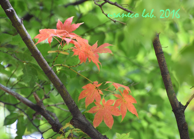 9月6日秋のはじまり3