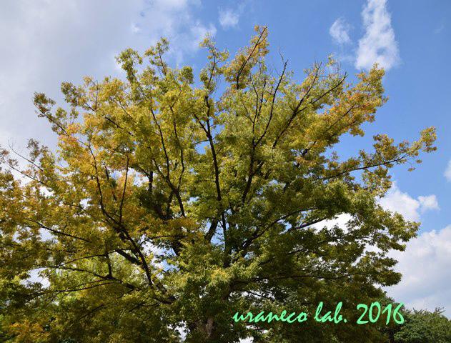 9月6日秋のはじまり2