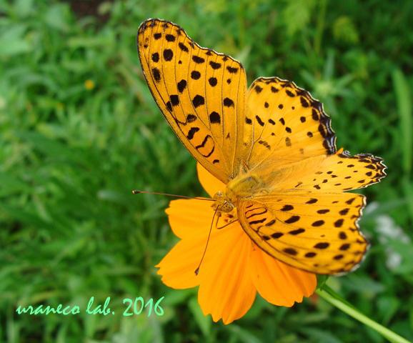 9月6日オレンジ色