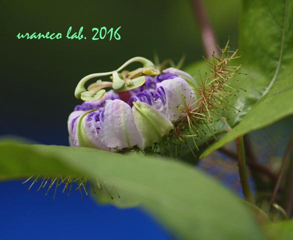 9月6日トゲトゲの花