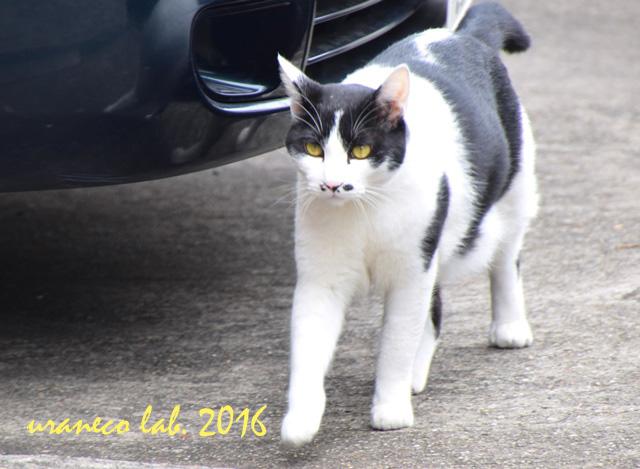 9月23日白黒猫のしのし