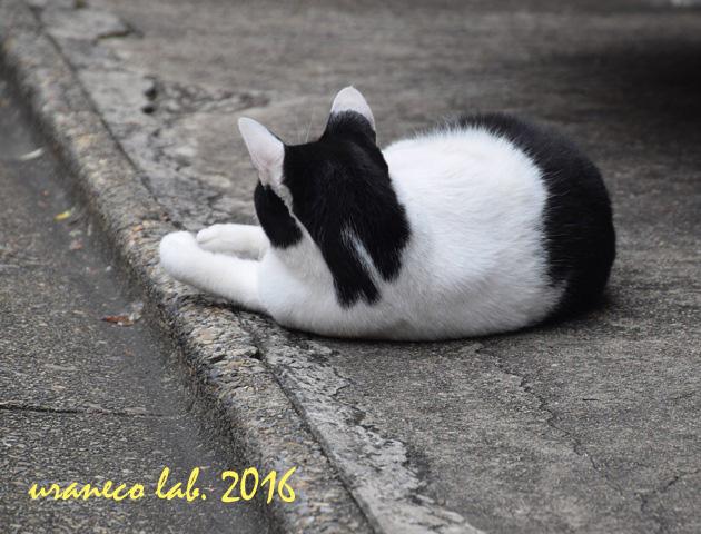 9月23日白黒猫うしろ姿