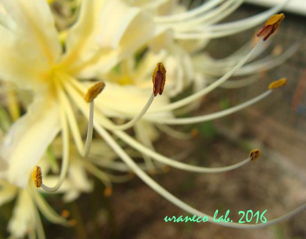 9月23日彼岸の花