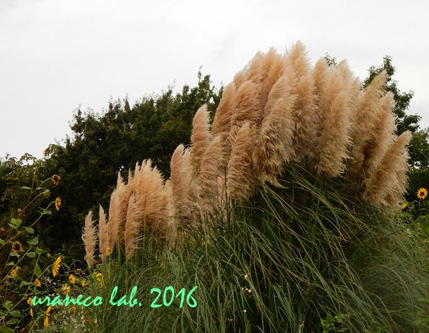 9月20日秋の風景5