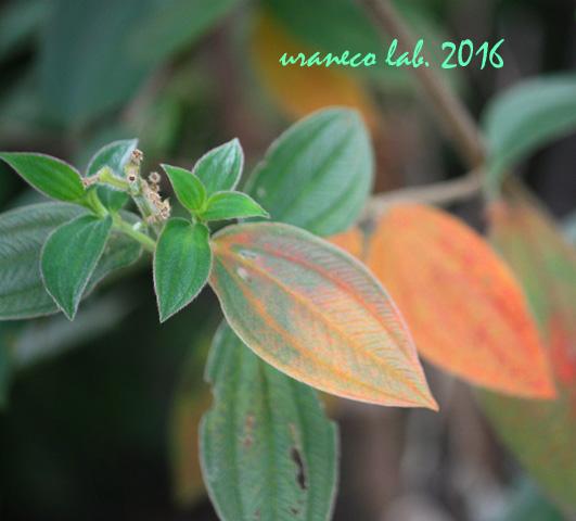 9月23日橙色に染まる