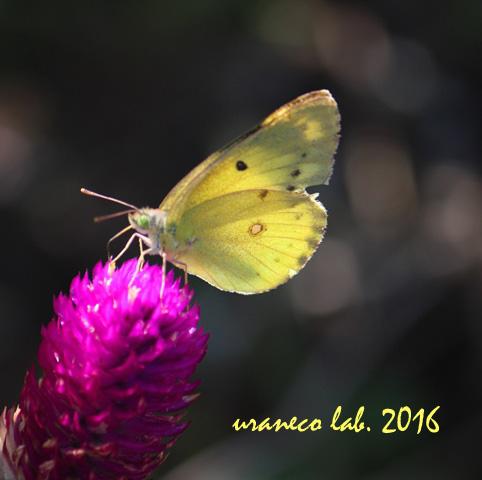 9月23日美蝶々6