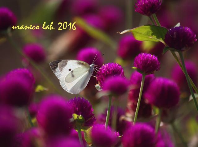 9月23日美蝶々7