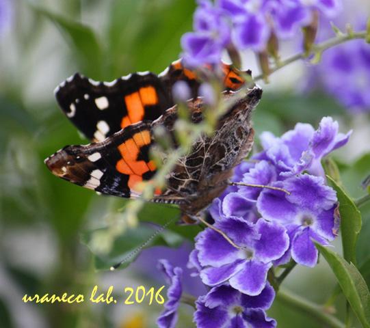 9月23日美蝶々5