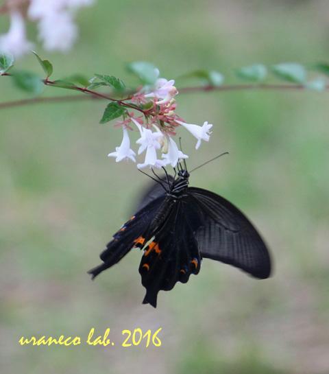 9月23日美蝶々4