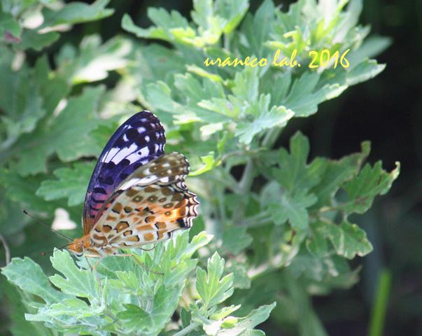 9月23日美蝶々2