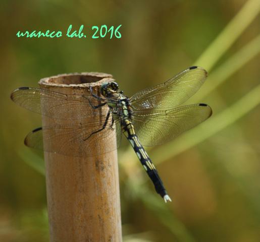 9月23日蜻蛉