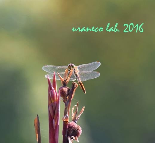 9月23日蜻蛉4